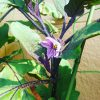 【アーバンパーマカルチャー】段ボールコンポストでできた肥料を使った家庭菜園の近況【バーティカルガーデン】