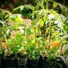 【アーバンパーマカルチャー】狭いところでも、水やり少しでもいいペットボトルプランターの作り方【家庭菜園】