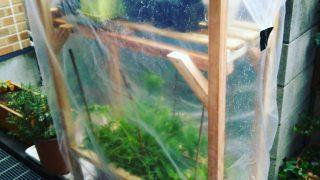 【アーバンパーマカルチャー】家庭菜園で周年栽培のおすすめ本と、300円の簡易ビニールハウスを作ってみた【読書感想文】