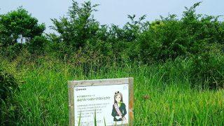 【堺第7-3区】みどりの会で植樹した木の救済活動してきました【みどりいっぱいプロジェクト】