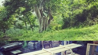 【DIYクリエーターズ】大きな栗の木の下にブランコ と 組み立て式の陳列棚を作ってみました。あとハンモックも【気持ちいい】